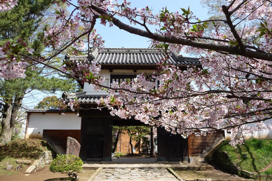 Cerisier devant la porte du château de Tsuchiura