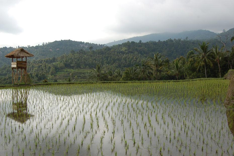 Rizière en pleine montagne à Bali