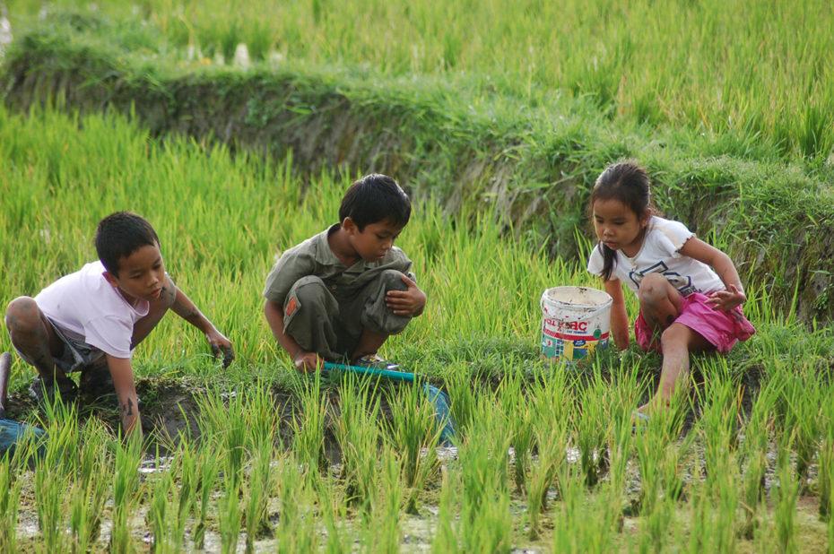 Les rizières, terrain de jeu pour les enfants balinais