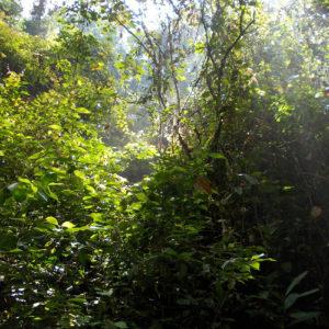 Dans le parc national Gunung Leuser à Sumatra