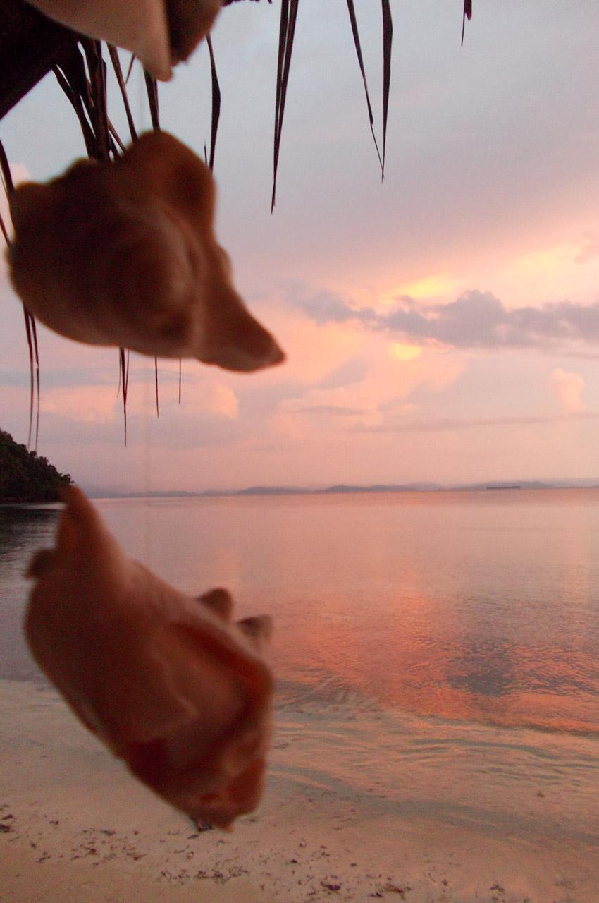 Fleurs roses au coucher de soleil sur la plage
