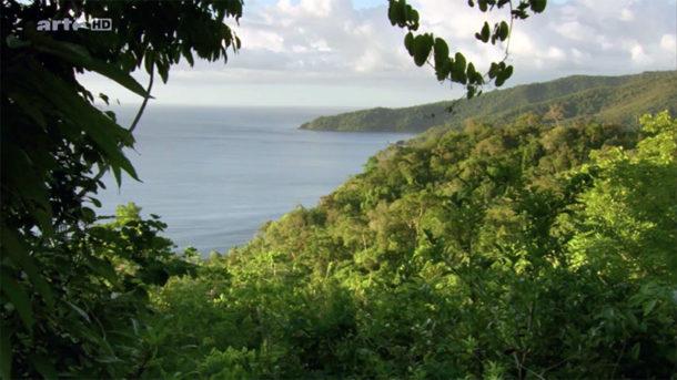 Forêt et mer sur l'île de Palawan