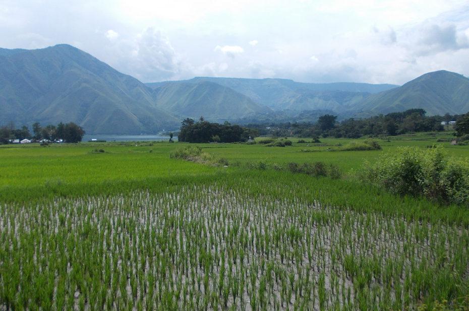 Samosir, grande presqu'île dans le lac Toba dans le nord de l'île de Sumatra