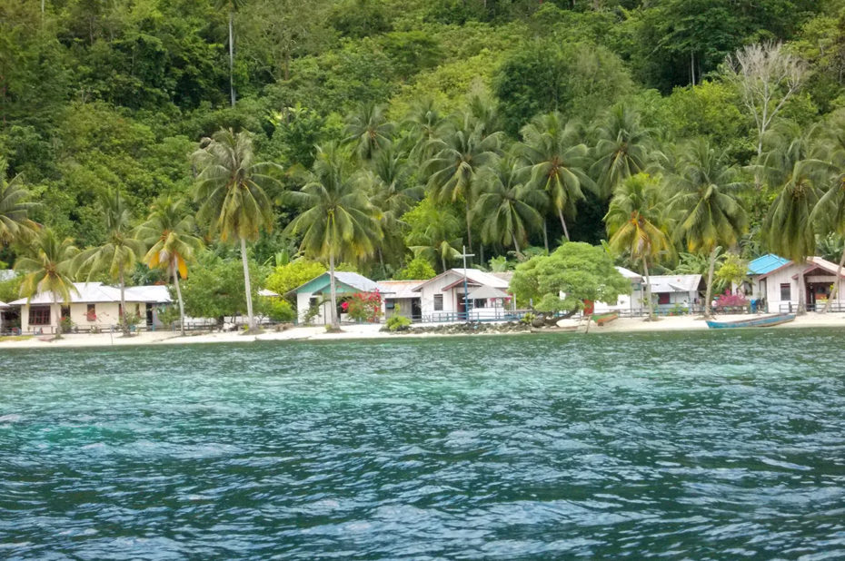 Maisons entourées de palmiers au bord de la mer