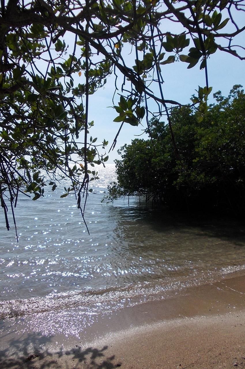 Entre plage et mangrove