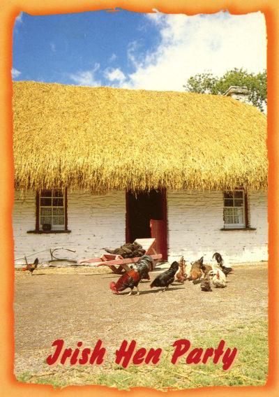 Des poules irlandaises