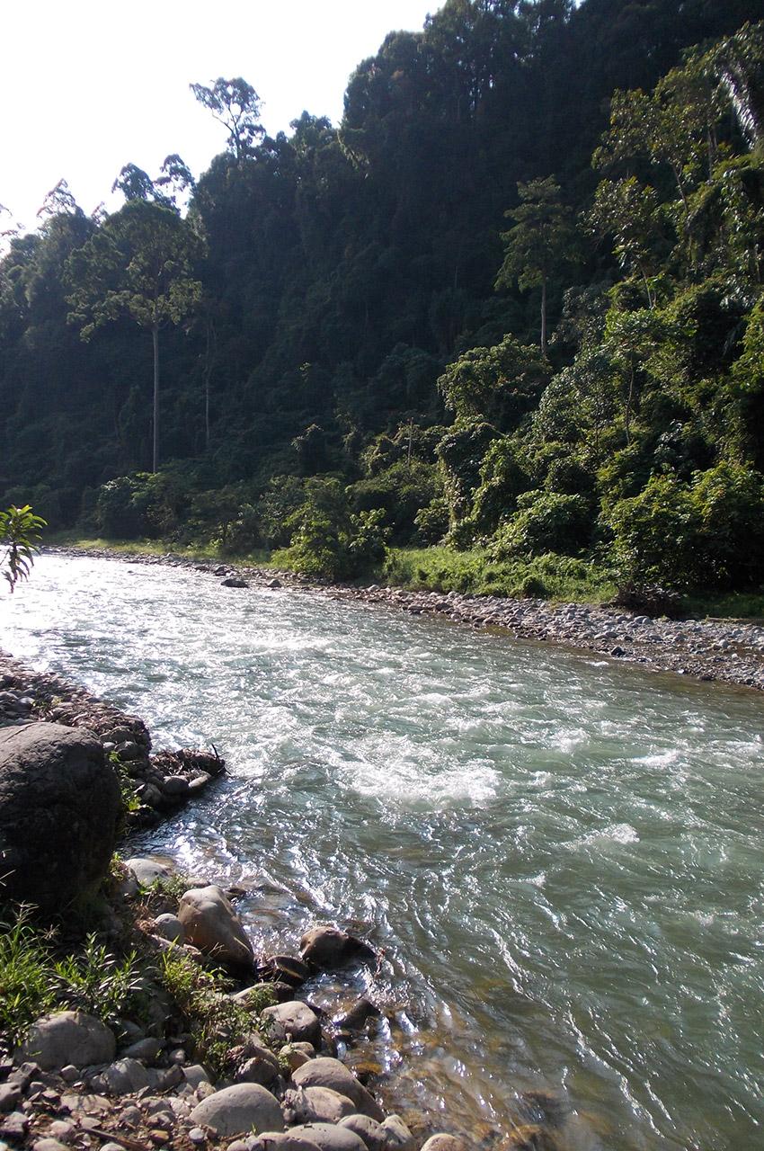 Un rivière traversant la forêt