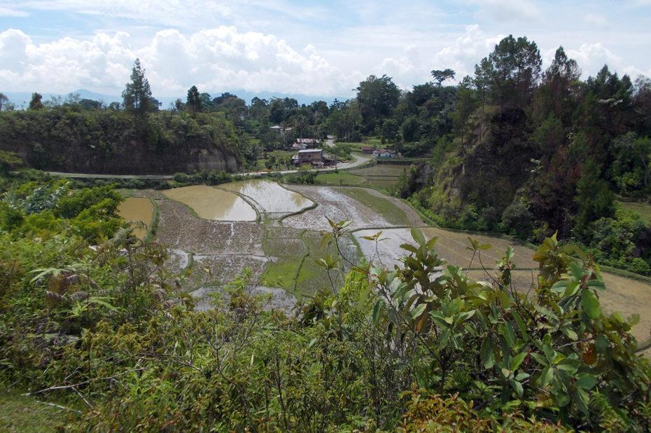Rizières inondées sur l'île de Sumatra