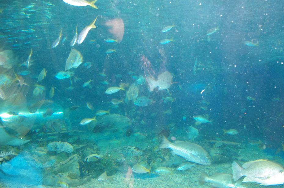 Visite de l'aquarium de Manille et découverte des poissons tropicaux
