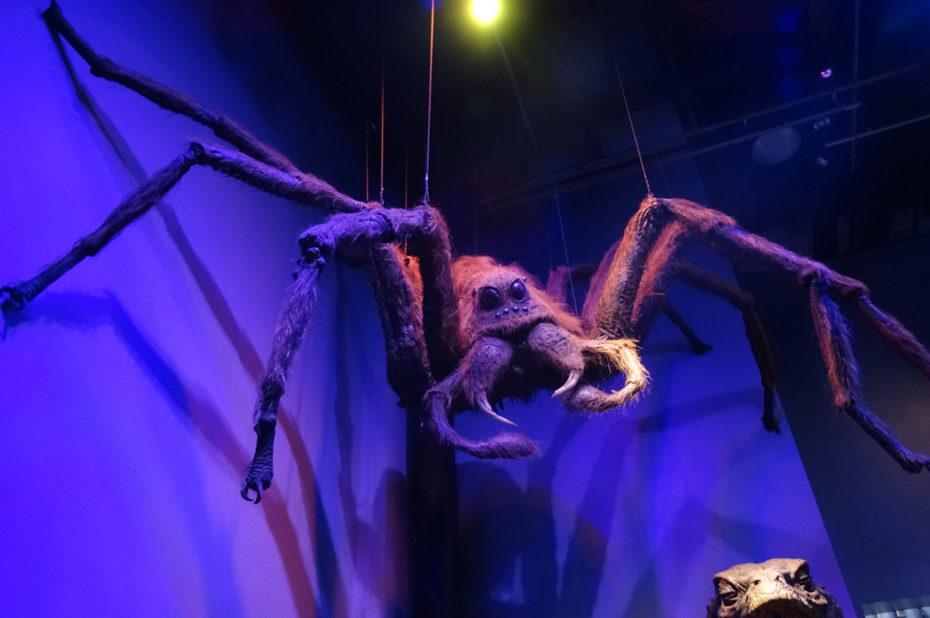 Aragog, une acromentule ramenée par Hagrid à Poudlard