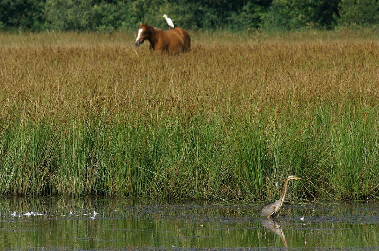 Cheval dans un étang