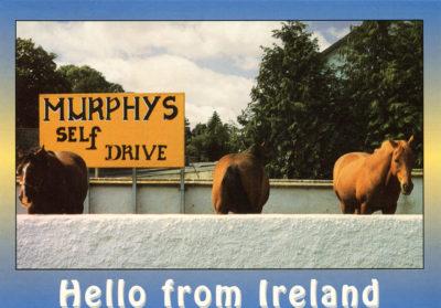 Chevaux d'Irlande