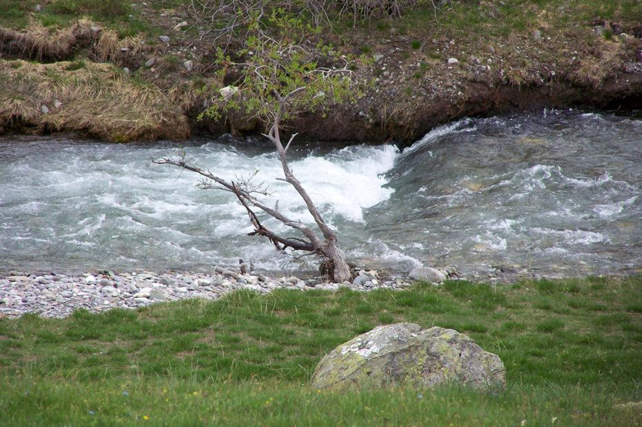 La rivière Clarée près de sa source