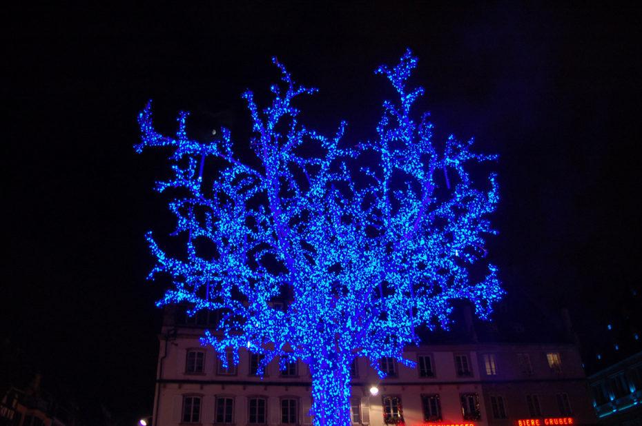 Ce magnifique arbre bleu attire tous les regards