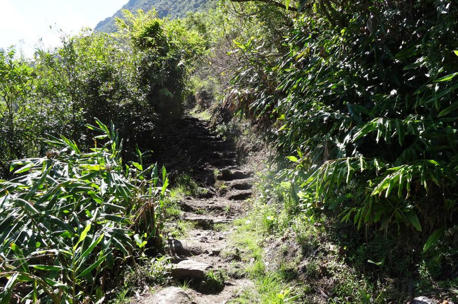 Chemin de randonnée à la Réunion