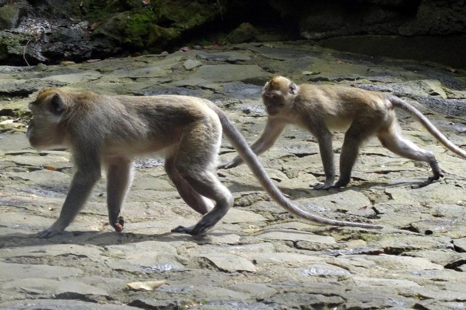 Deux singes