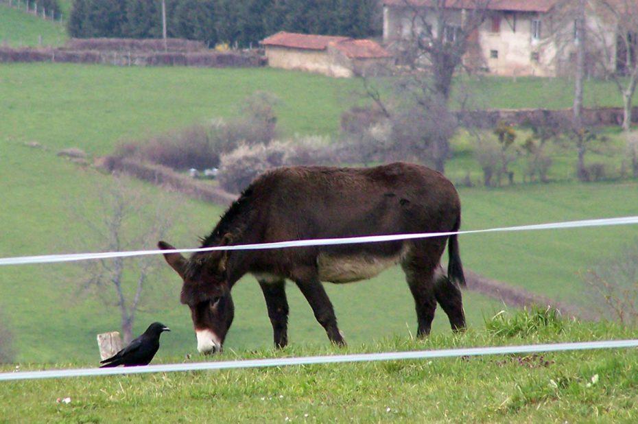 La fable de l'âne et du corbeau