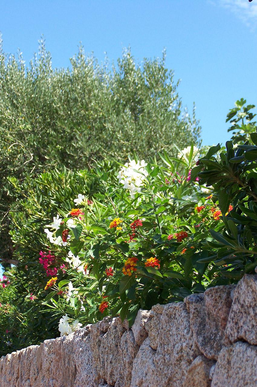 Les jardins des luxueuses propriétés sont très fleuris