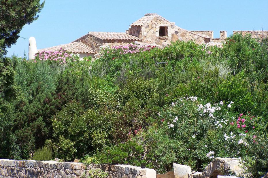 Maison en pierre presque recouverte par la végétation