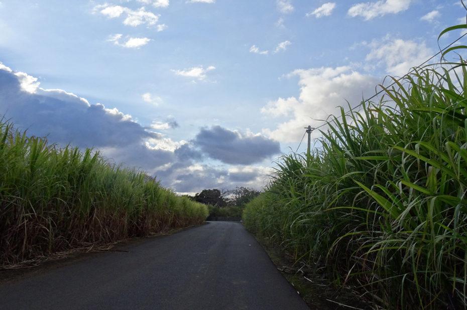 Route traversant les plantations de cannes à sucre