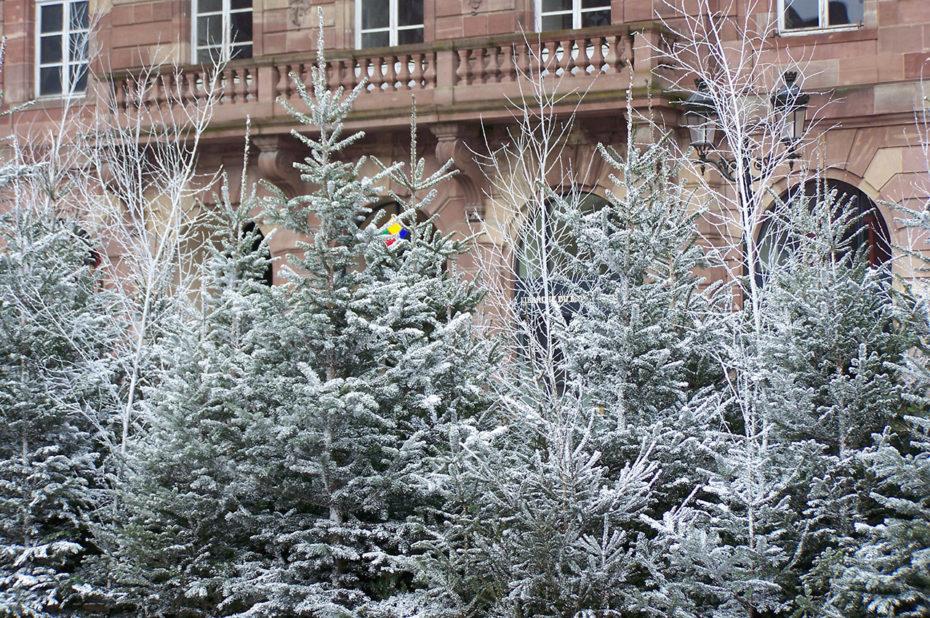 Des sapins recouverts de neige artificielle