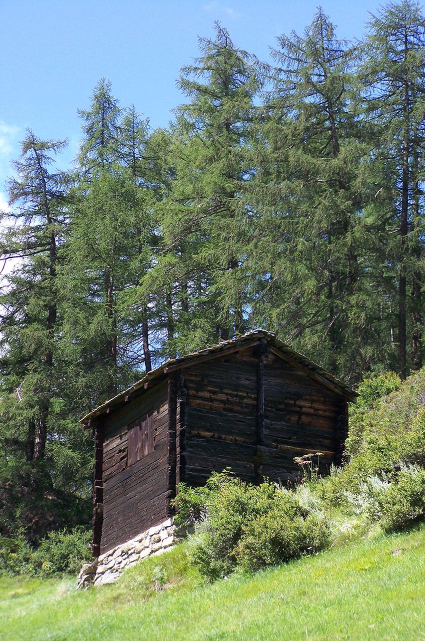 Une cabane au pied des sapins
