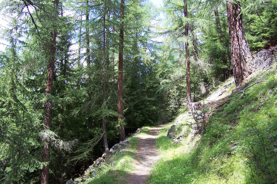 Le chemin à travers la forêt vers Täschalp