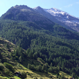 Vallons verdoyants et forêts à flanc de montagne