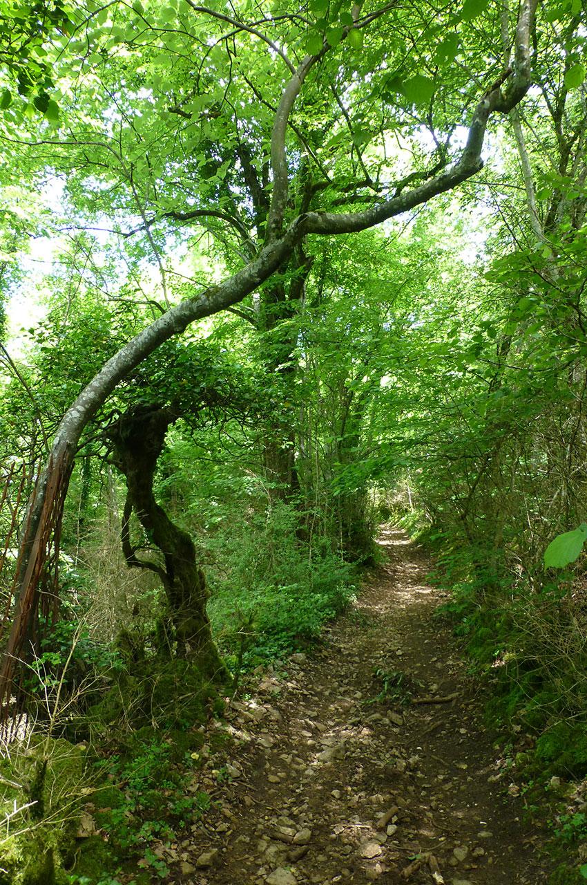 Le chemin ombragé dans la forêt