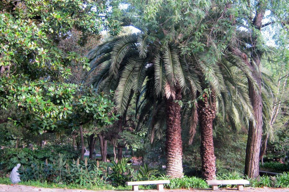De nombreuses variétés d'arbres, parfois exotiques