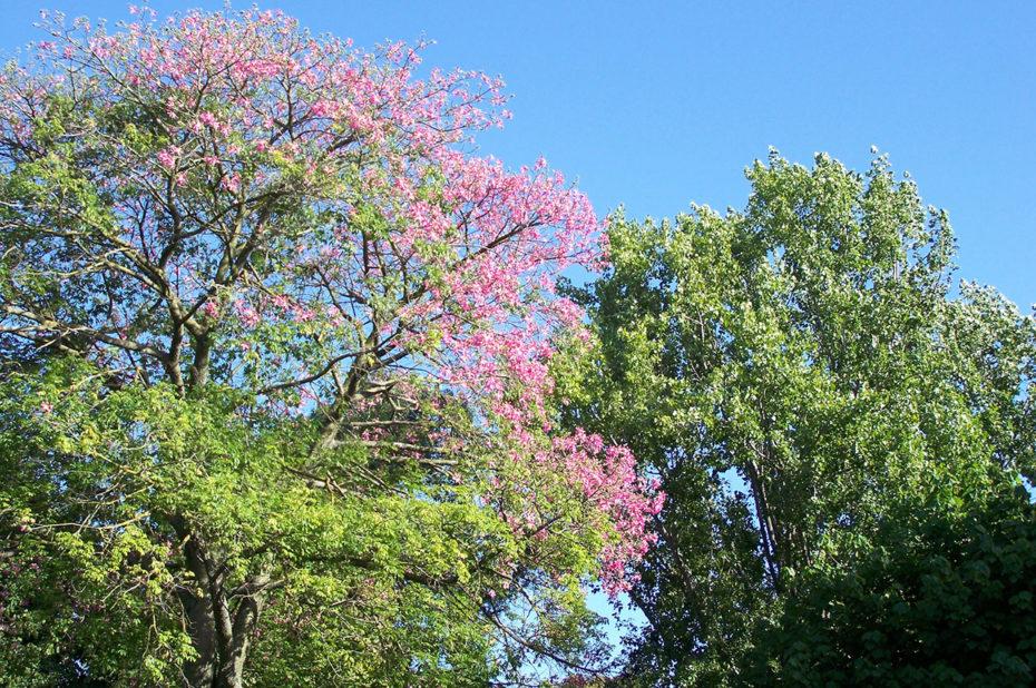 Arbres en fleurs dans le parc d'Estrela