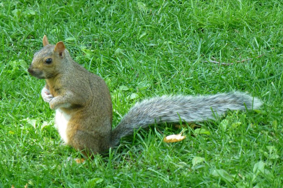 Un écureuil sur ses pattes arrière