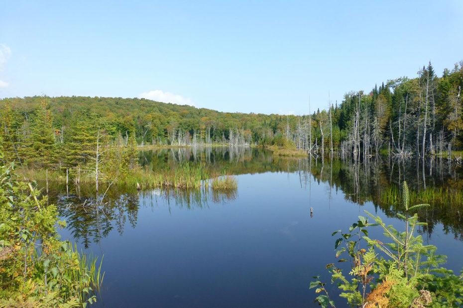 Les arbres se reflètent sur la surface du lac
