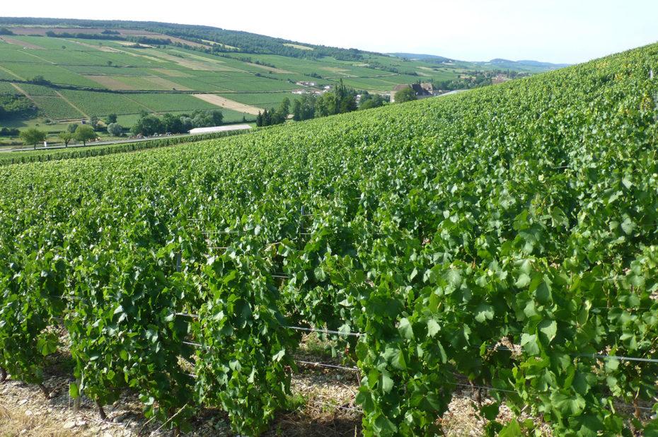 Au château de la Greffière, une activité viticole dès 1585