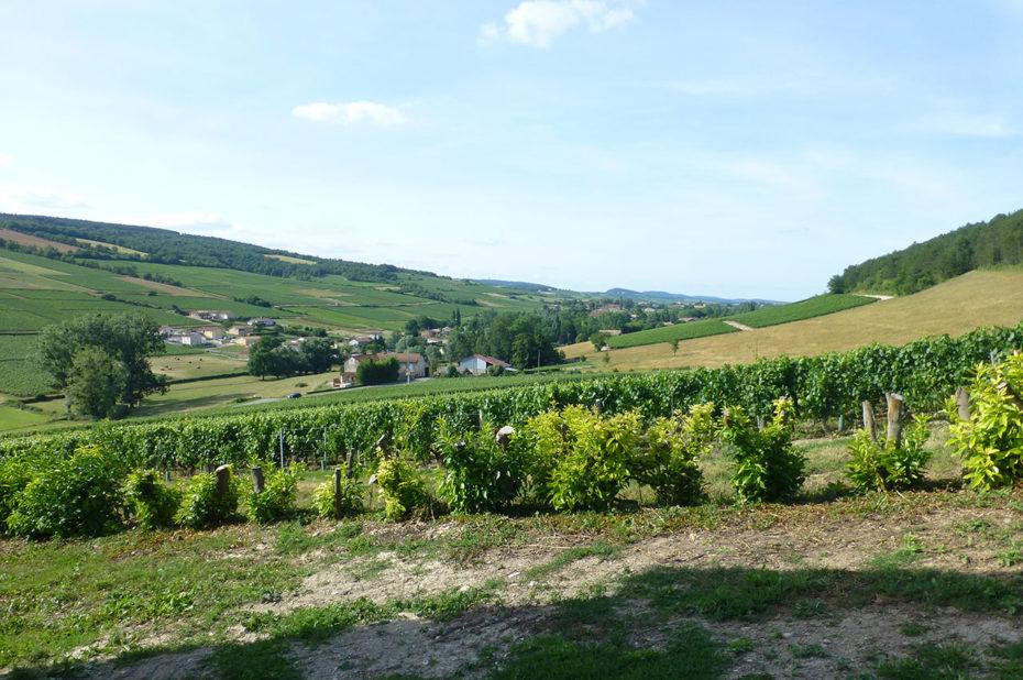Les coteaux de faible pente de la Bourgogne Sud