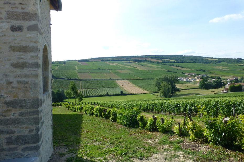Le domaine de la Greffière produit des vins blancs et rouges