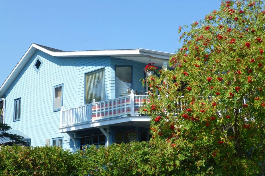 Une maison bleue et un sorbier des oiseleurs