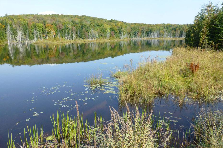 Plantes et végétaux vivent dans l'eau pure du lac