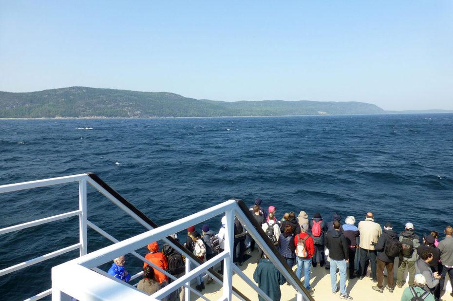 Sur le bateau guettant les baleines