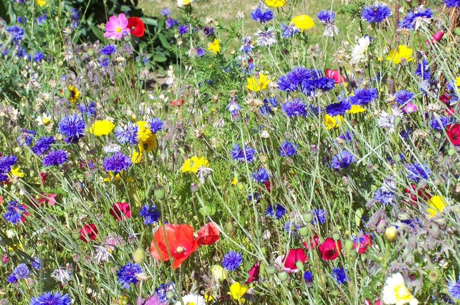 Des fleurs de montagne de toutes les couleurs