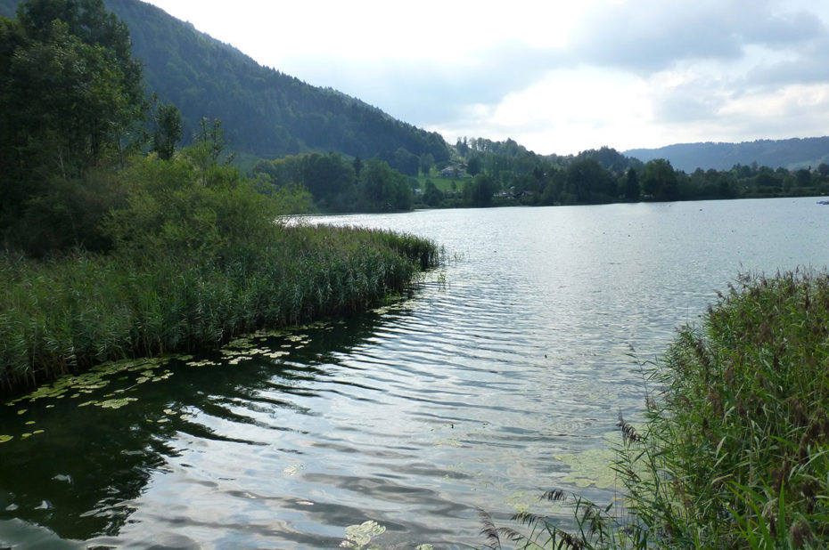 Plantes d'eau et nénuphars au bord de l'étang Stockenweiler Weiher
