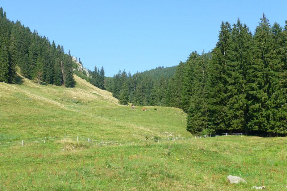 Les alpages où paissent les troupeaux