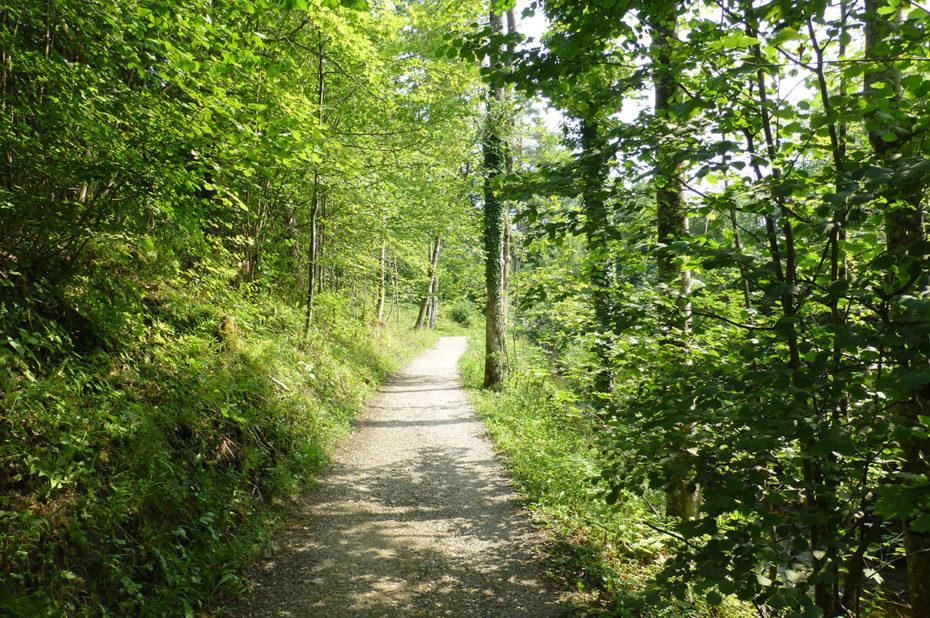 Sur le chemin qui fait le tour du lac Weissensee