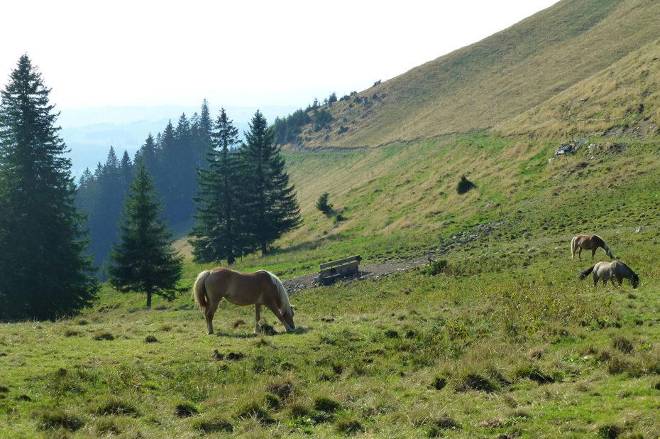Des chevaux dans un pré en direction de Reuterwanne