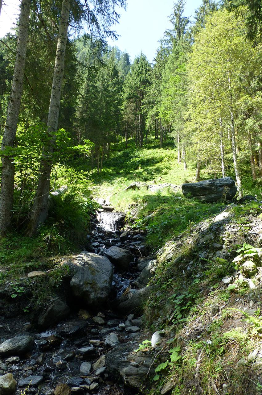 Une forêt clairsemée idéale pour la promenade