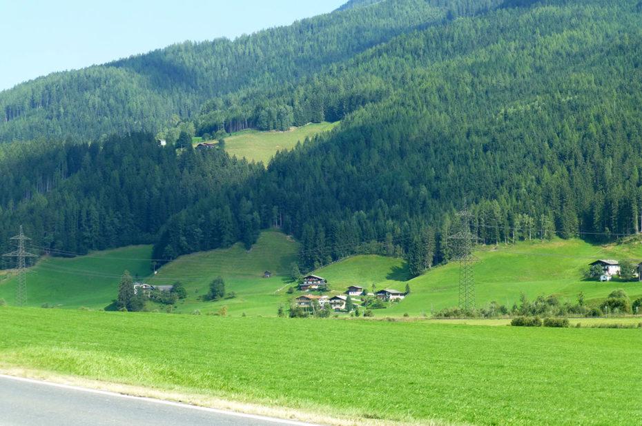 Forêt de sapins sur le flanc de la montagne