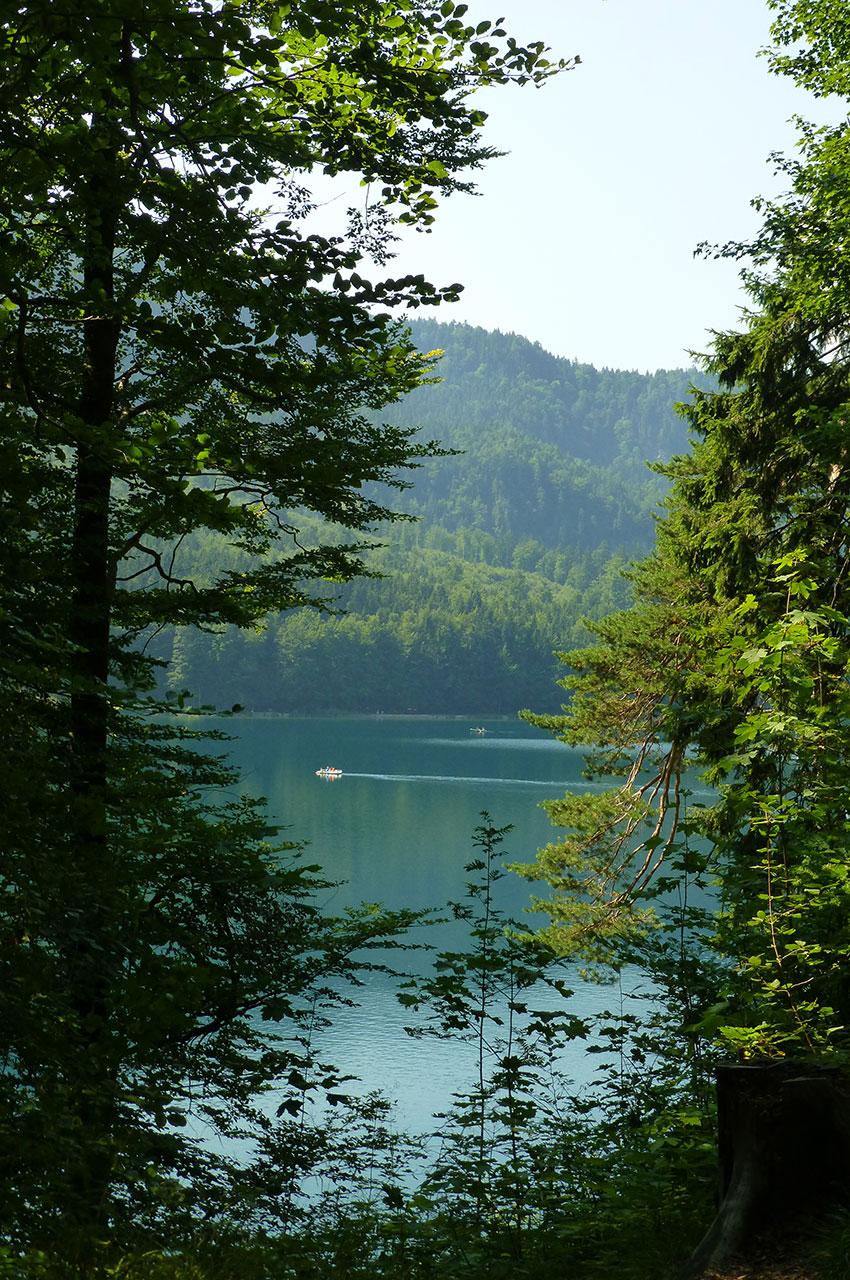 Le lac Alpsee à travers les arbres