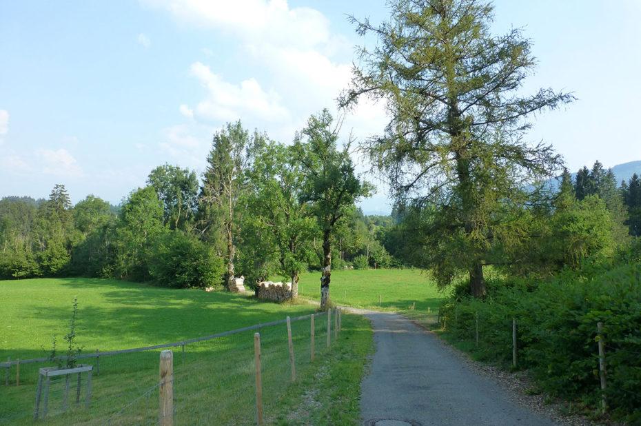 Route de campagne sur les hauteurs de Oy-Mittelberg