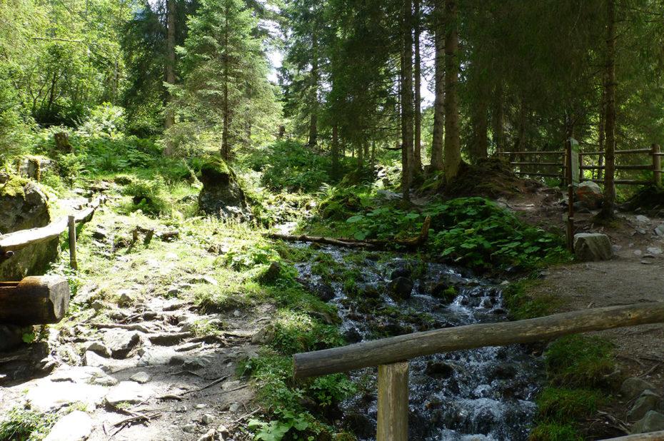 Le ruisseau passe au cœur de la forêt