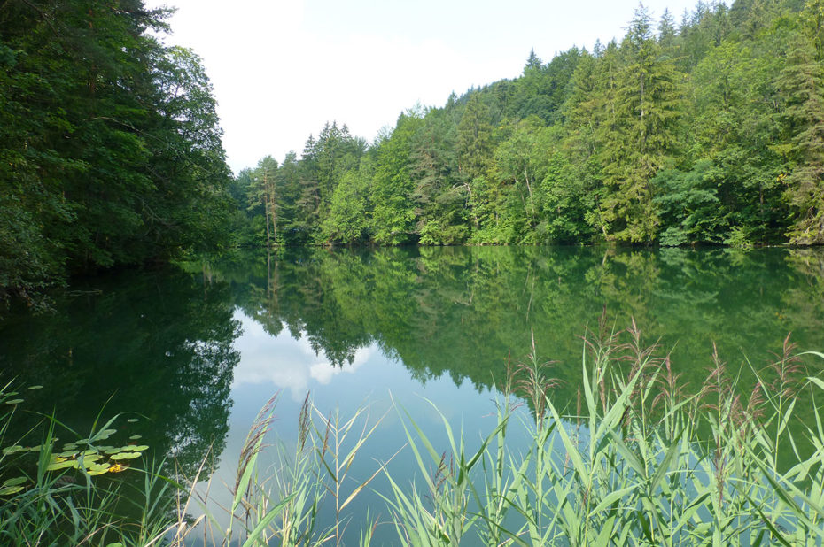 Végétation très dense aux abords du lac Weissensee